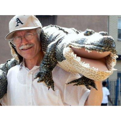 amazon-stuffed-alligator.jpg