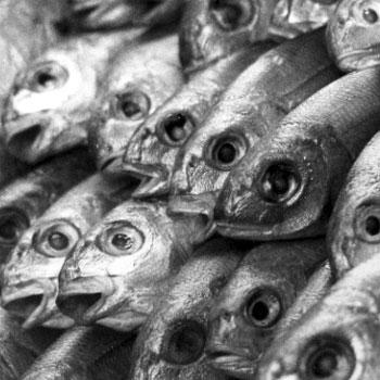dead_fish.jpeg