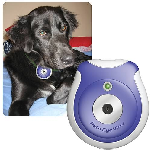 pet-eye-view-camera.jpg