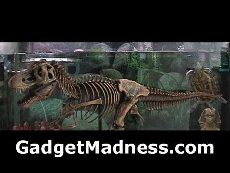 t-rex_video.jpg